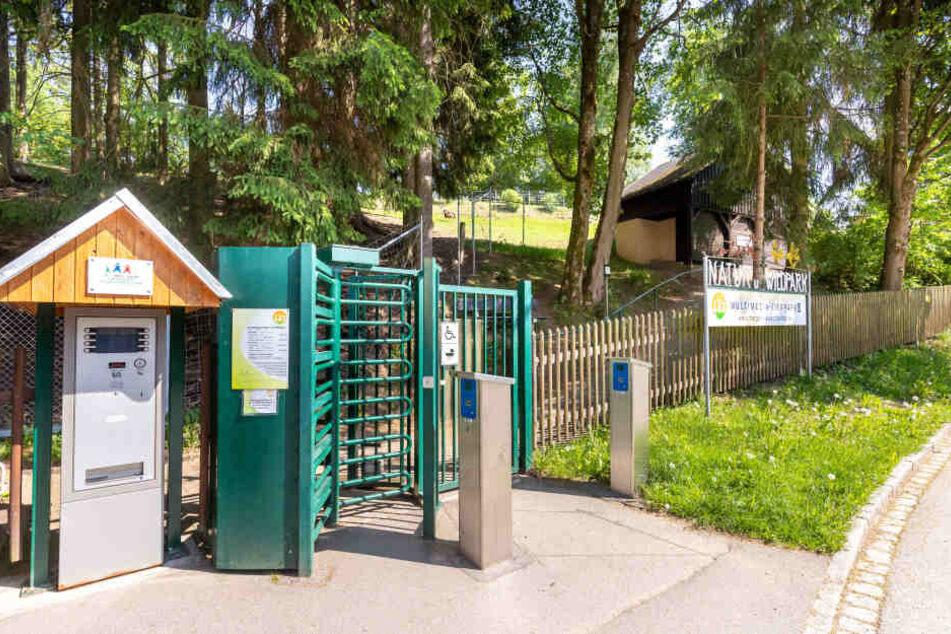 Im Natur- und Wildpark Waschleithe gibt es niedlichen Rentiernachwuchs.