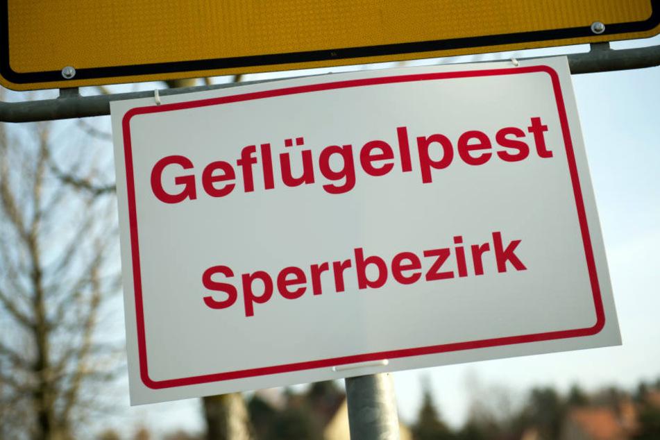 Drei Störche im Tierpark Gotha sind möglicherweise an der Vogelgrippe verendet.