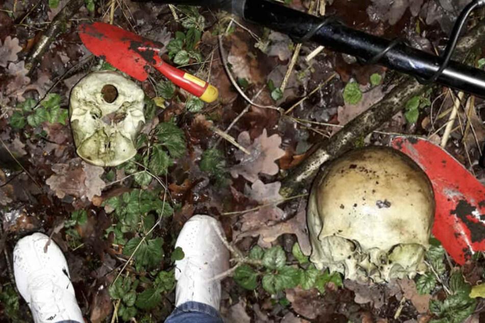Schock-Fund im Wald: Schatzsucher findet menschlichen Schädel