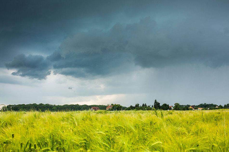 Regengüsse und Hagel prasselten auf die Felder nieder.