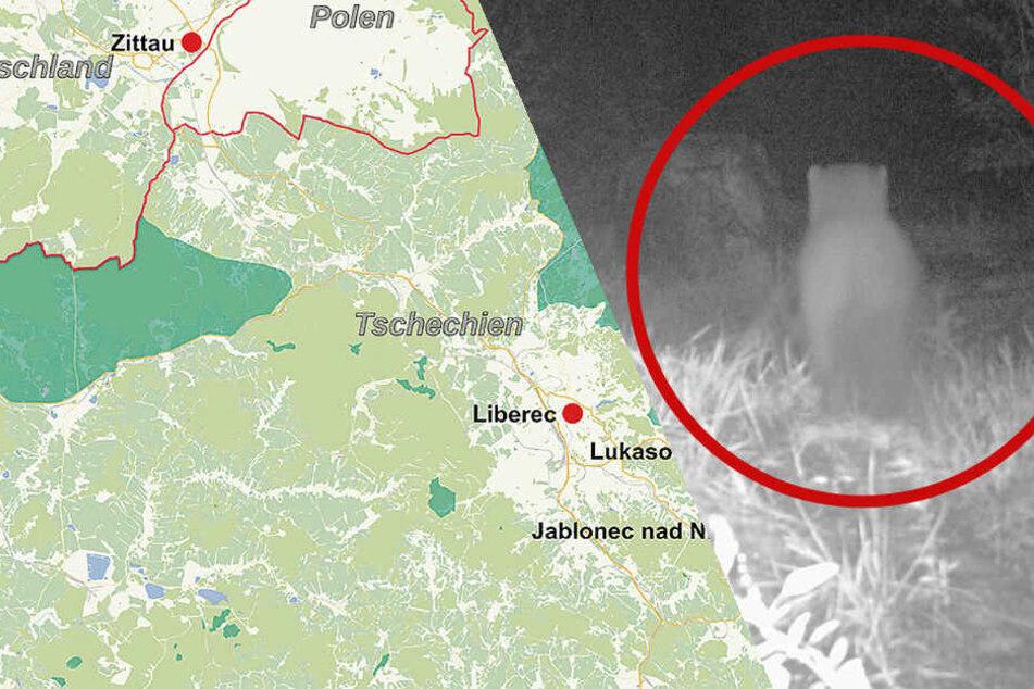 Mysteriöser Fotobeweis: Hungrige Raubkatze unterwegs nach Sachsen?