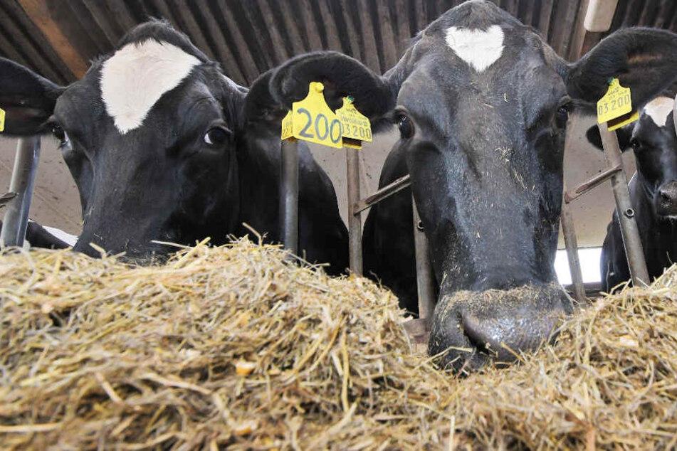 Immer mehr Bauern nutzen Futtermittel aus heimischer Erzeugung für ihre Tiere.