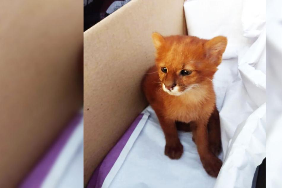 Frau findet verletzte Katze und will sie aufnehmen, doch ein Tierarzt rät ihr davon ab