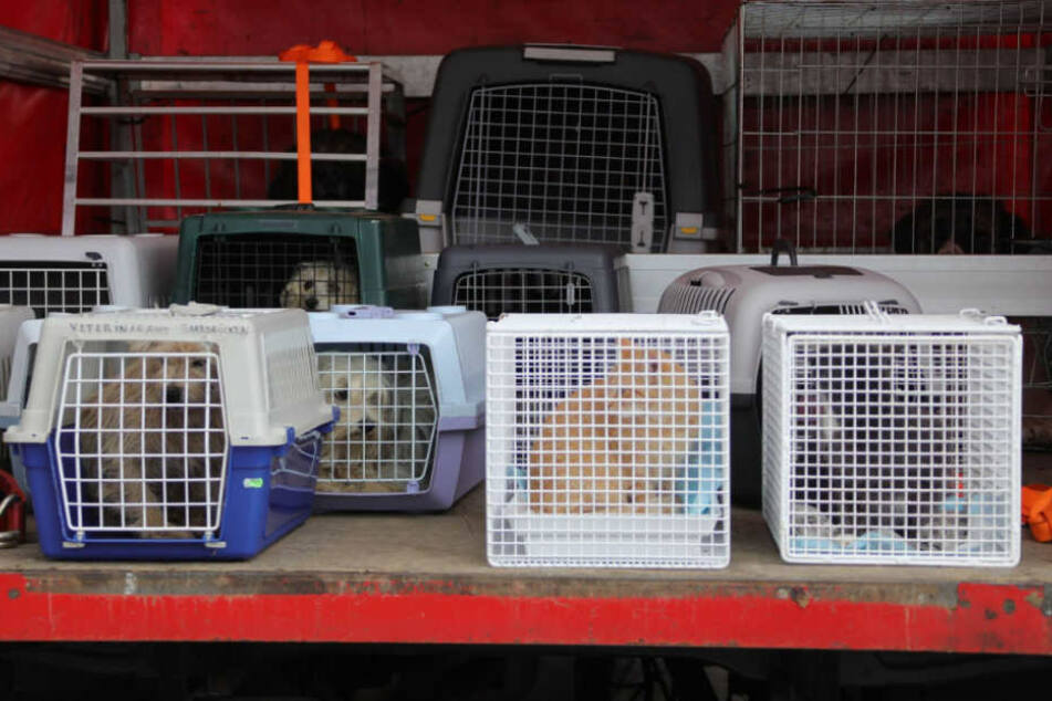 Hunde und Katzen und andere Tiere sitzen in Käfigen auf der Ladefläche eines Lastwagens.