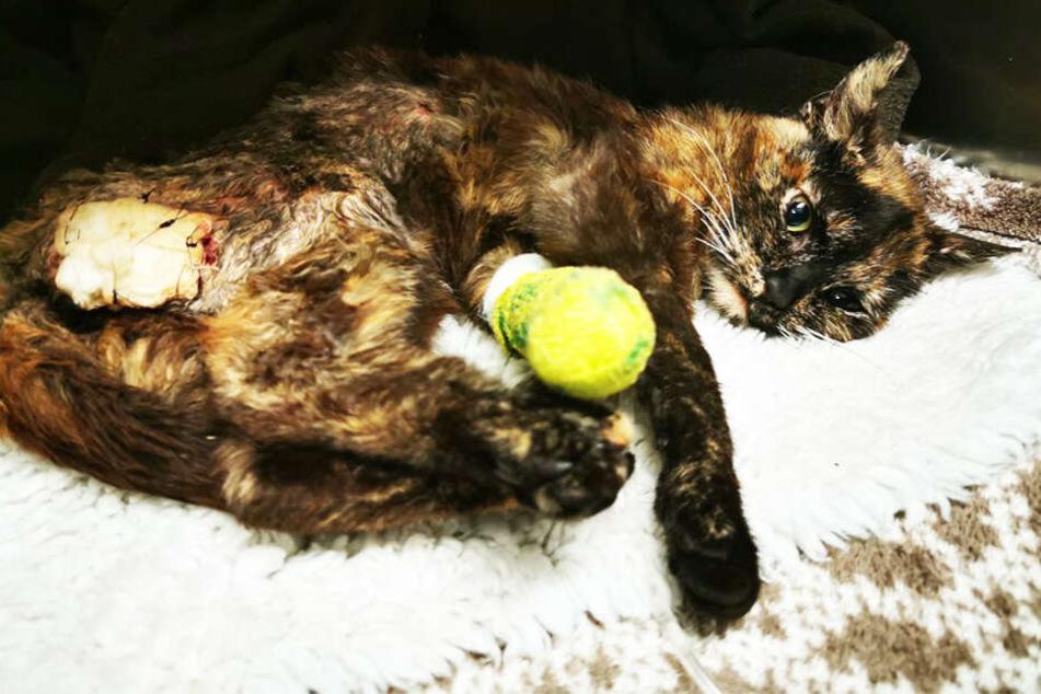 Übel zugerichtete Katze gefunden: Schrecklich, was Minnie angetan wurde!