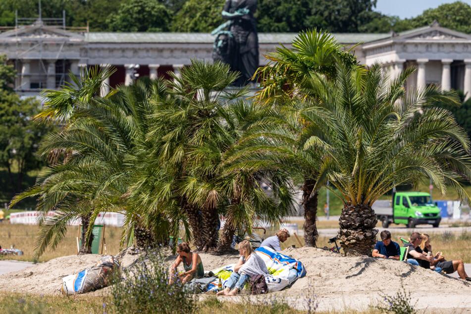 Eine Mini-Oase aus ganz viel Sand mit 13 Palmen wurden auf einem Teil der Theresienwiese aufgebaut.