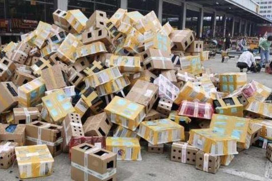 In diesen Kartons fand man Tausende tote Tiere.