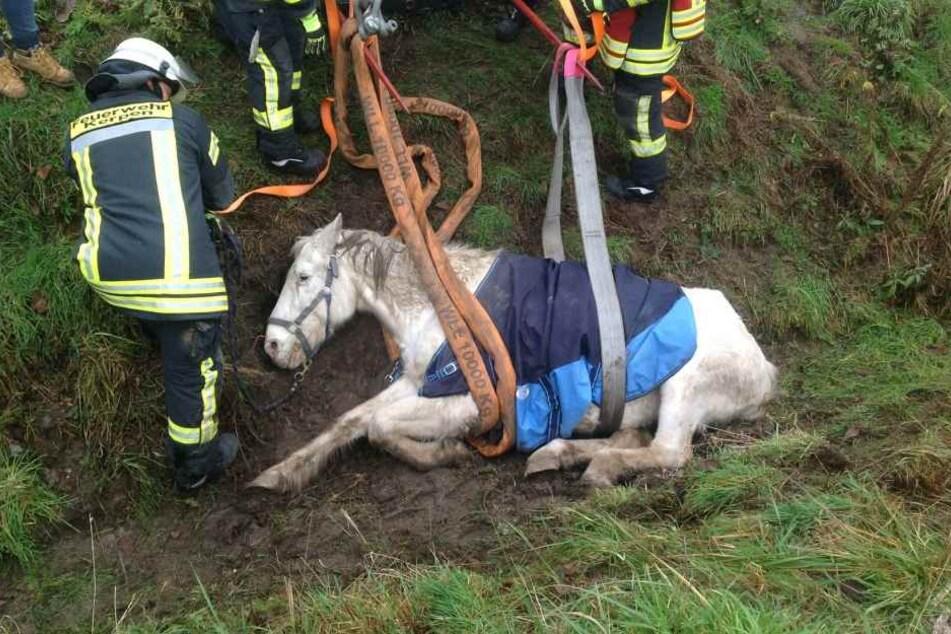Das Pferd war in einen Graben abgerutscht und konnte sich alleine nicht mehr befreien.