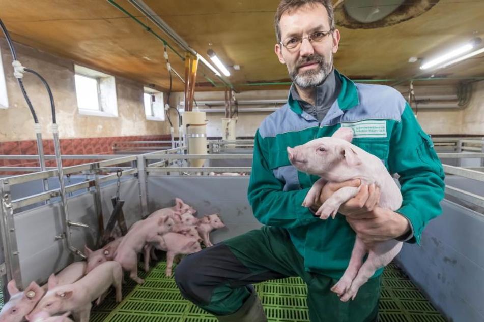 Landwirt Frank Schröder (53) aus Großwaltersdorf sorgt sich um seine Schweine.