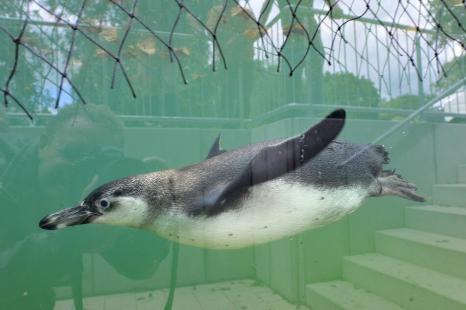 Die Wasserqualität sei nicht Schuld am Tod der Tiere.