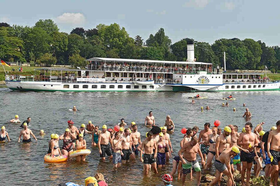 1800 Wasserratten waren beim Elbeschwimmen dabei.