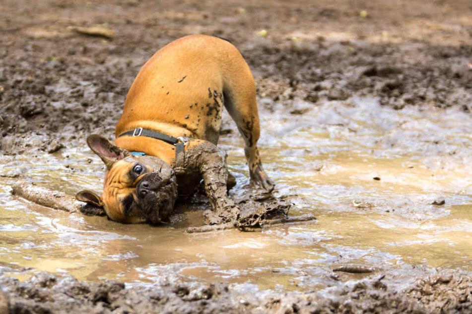 Das macht richtig Laune! ...und schreit nach einem Hunde-Waschtag.