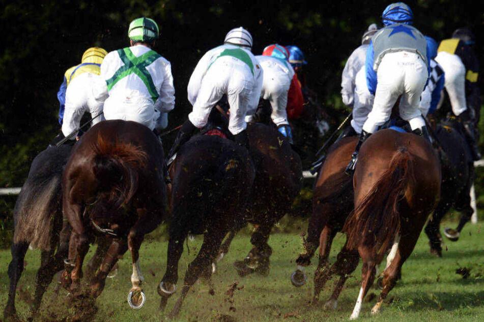 """""""Auf dem schweren Boden ist er ein ganz anderes Pferd"""", sagte Trainer Grewe über das Siegerpferd (Symbolbild)."""