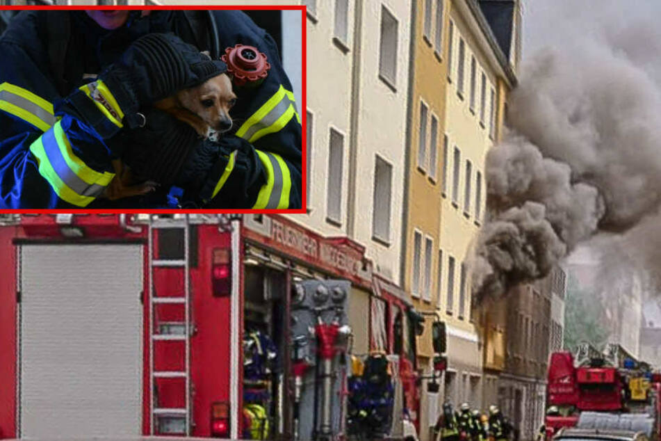 """Tier-Drama bei Brand! """"Snoopy"""" wird gerettet, aber eine Katze stirbt in Flammen"""