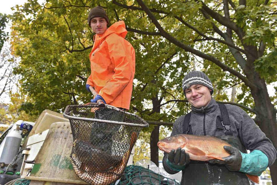 600 Kilogramm Karpfen gab der königliche Teich in diesem Jahr her, wie die Teichwirte Lucas Piesold (22, l.) und Florian Tandler (22) zeigen.