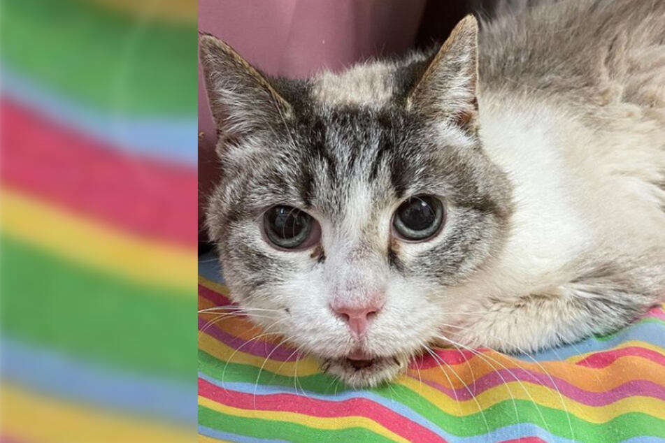 """Katze durchlebt 16 Jahre die Hölle: Tierheim-Mitarbeiter """"fassungslos"""""""