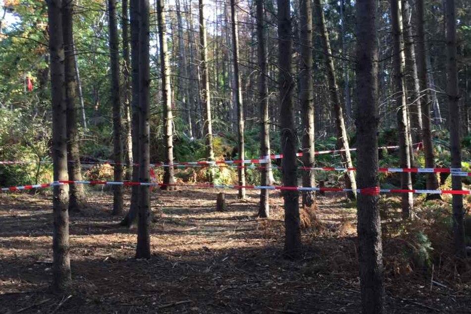 Gericht stoppt vorerst Rodung im Hambacher Forst