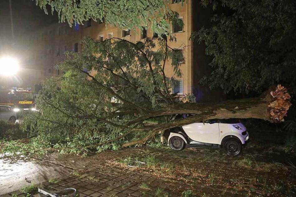 In Dresden-Klotzsche fiel ein Baum auf einen Smart ForTwo.