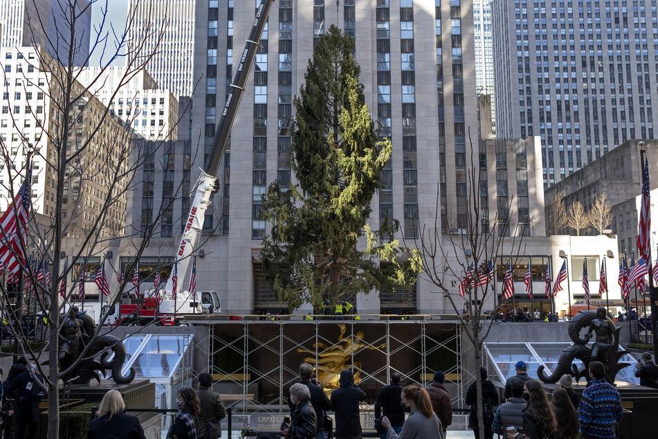 Eine knapp 23 Meter lange Fichte wird mit Hilfe eines Krans am Rockefeller Center aufgestellt. An dem traditionellen Weihnachtsbaum sollen in diesem Jahr trotz der Corona-Pandemie die Lichter angezündet werden.