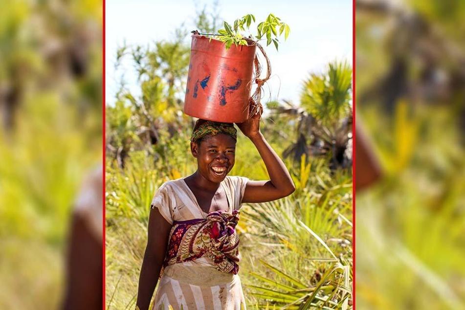 Für jede verkaufte Box lassen die Dresdner in Madagaskar einen Mangroven-Baum pflanzen.