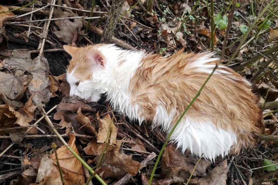 """Die Katze, die auf den Namen """"Maja"""" getauft wurde, ist vermutlich von einem Auto angefahren worden."""