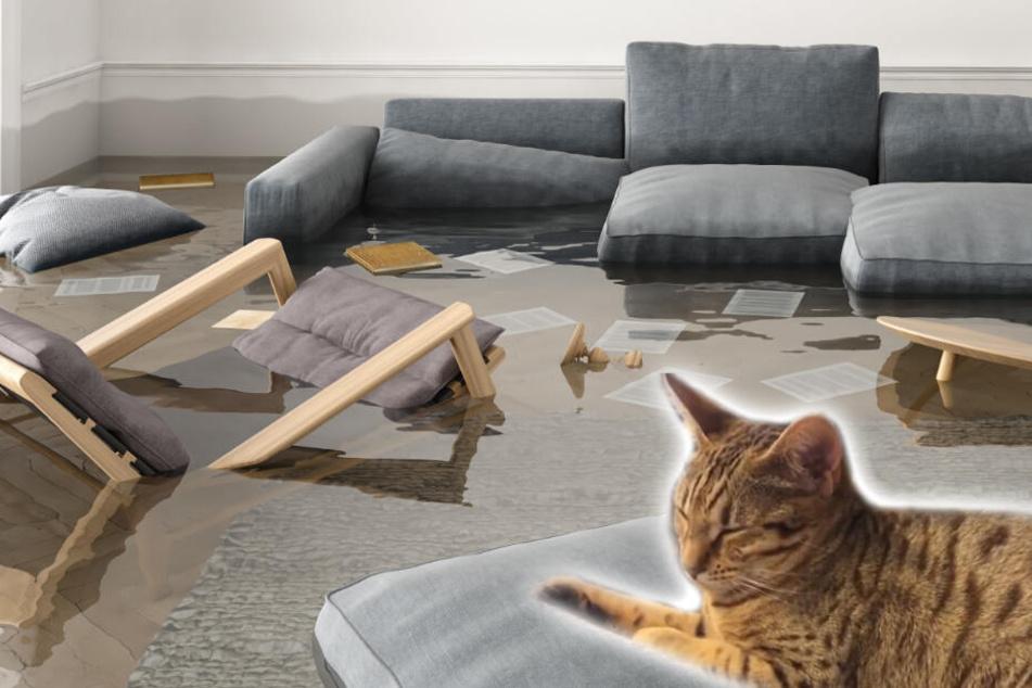 Katze hinterlässt Spur der Verwüstung, aber ist sich keiner Schuld bewusst