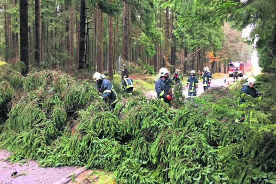 Die Behörden haben ein striktes Betretungsverbot für fast alle Wälder verhängt.