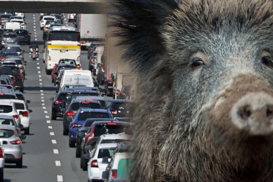 A3-Sperrung am frühen Morgen: Autofahrer kracht bei Köln in Wildschweine