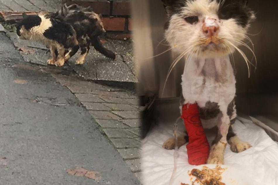Katze kurz vorm Tod gerettet, dann staunen ihre Retter