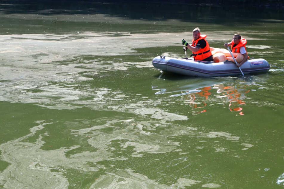Riesiger öl Teppich Auf Sächsischem Teich Entdeckt Tag24