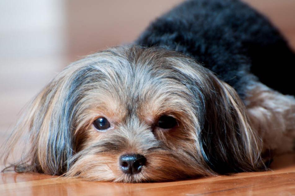 Ein Yorkshire-Terrier musste von der Feuerwehr aus einem Wohnmobil befreit werden, die Besitzerin klagte nun gegen die Kosten der Rettungsaktion. (Symbolbild)