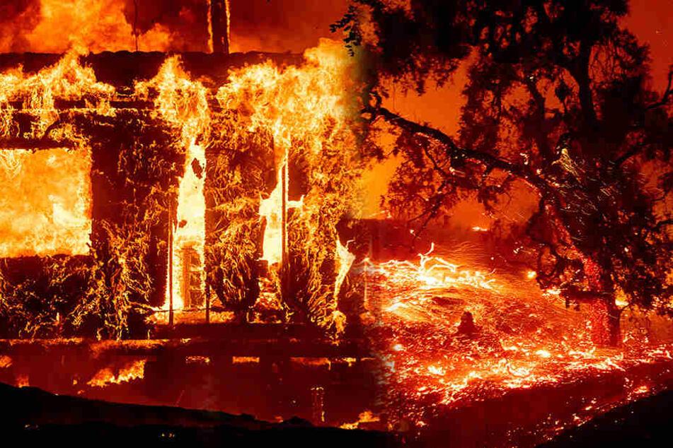 Feuerwalze in Kalifornien! Schlimme Bilder aus den USA