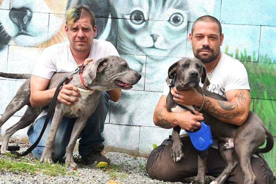 Das Tierheim und seine Mitarbeiter kümmern sich um rund 30 Hunde, 40 Katzen und zahlreiche Kleintiere.