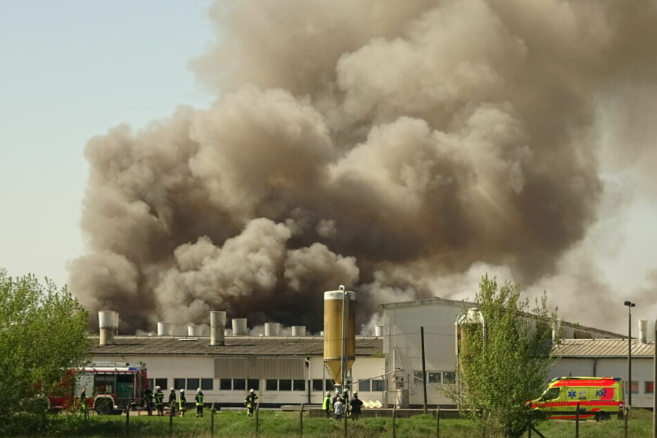 Bei dem Feuer waren am Sonntag rund 2000 Ferkel ums Leben gekommen.