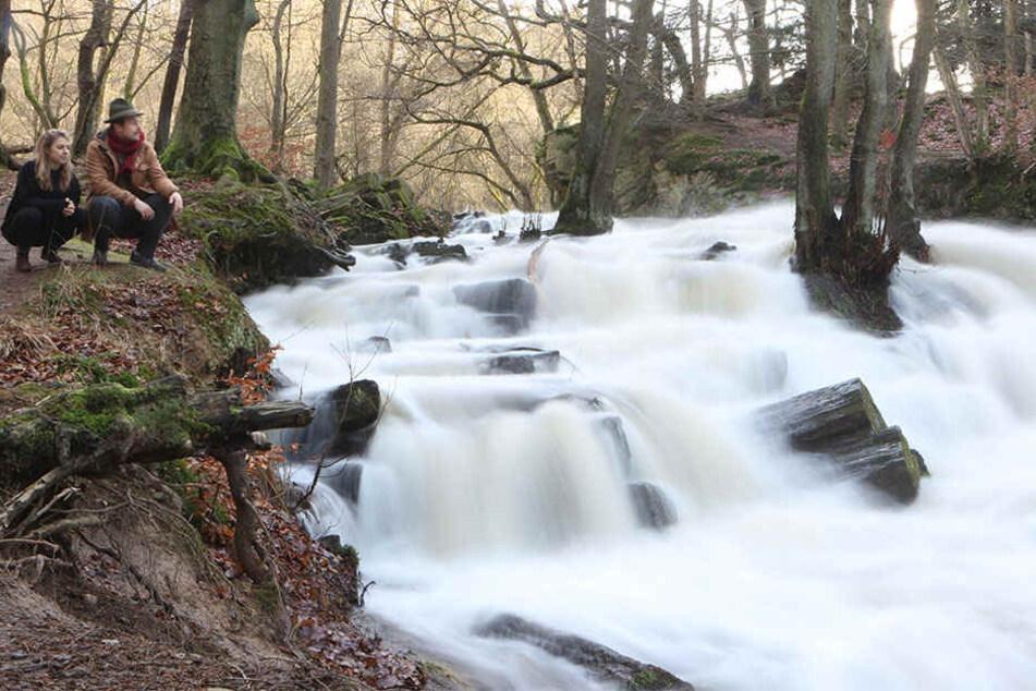 Die meisten Flüsse in Sachsen-Anhalt führen derzeit Hochwasser. Mancherorts wurde bereits eine Alarmstufe ausgerufen.