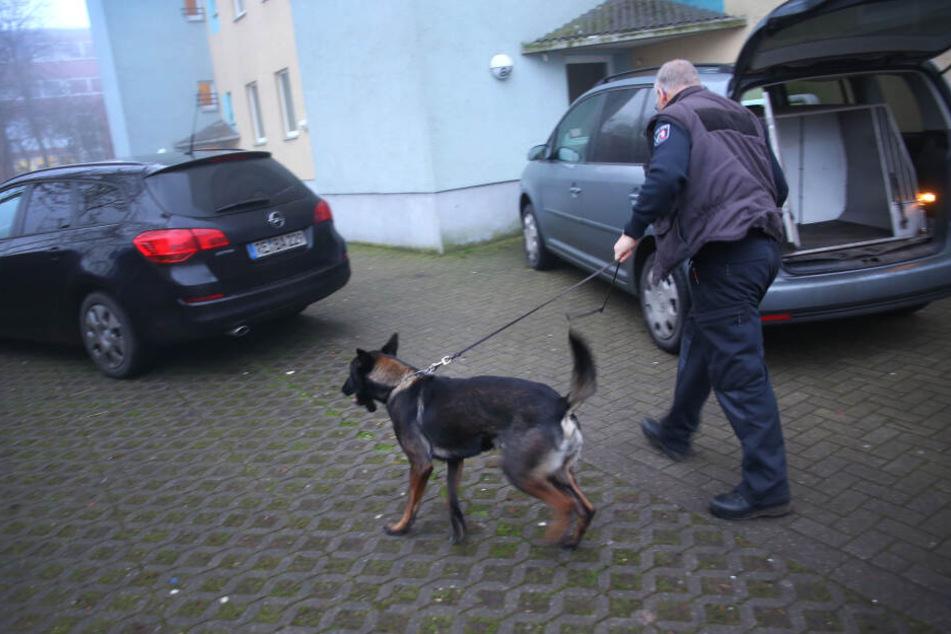 Castrop-Rauxel: Ein Polizeihund wird zu einem Wohnhaus geführt.
