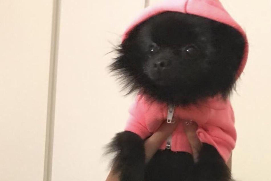 Dieser kleine Hund hat über eine Million Follower