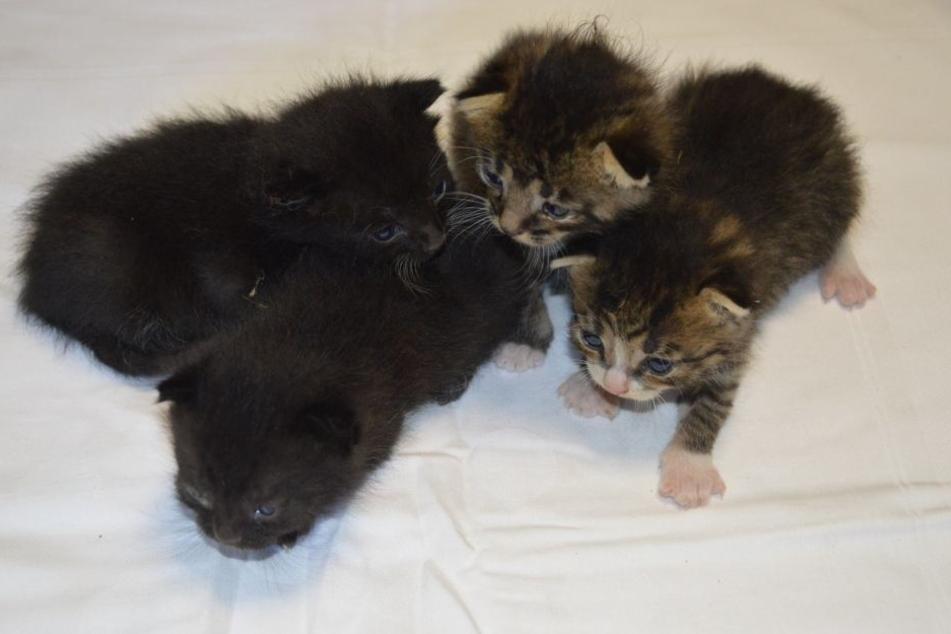 Diese kleinen Kätzchen suchen Paten.