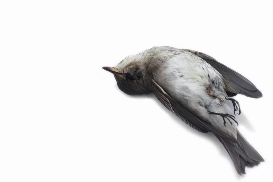 Seit 2015 sollen NABU-Mitarbeiter 23 tote Vögel gefunden haben. (Symbolbild)