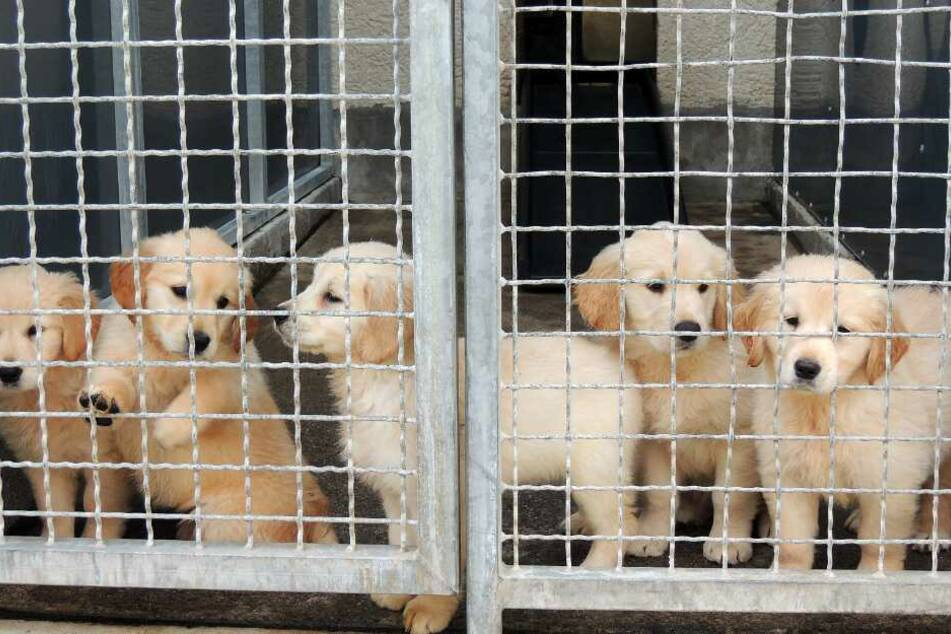 Hundewelpen stehen in einem Zwinger im Tierheim.