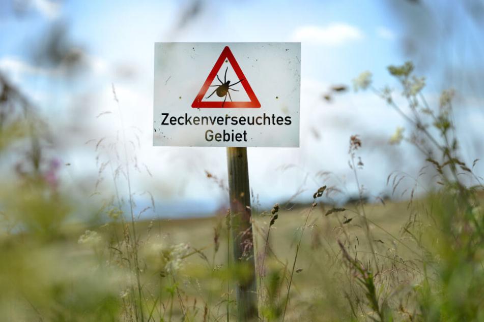 Nach dem Besuch im Wald sollte man sich gründlich nach Zecken absuchen.