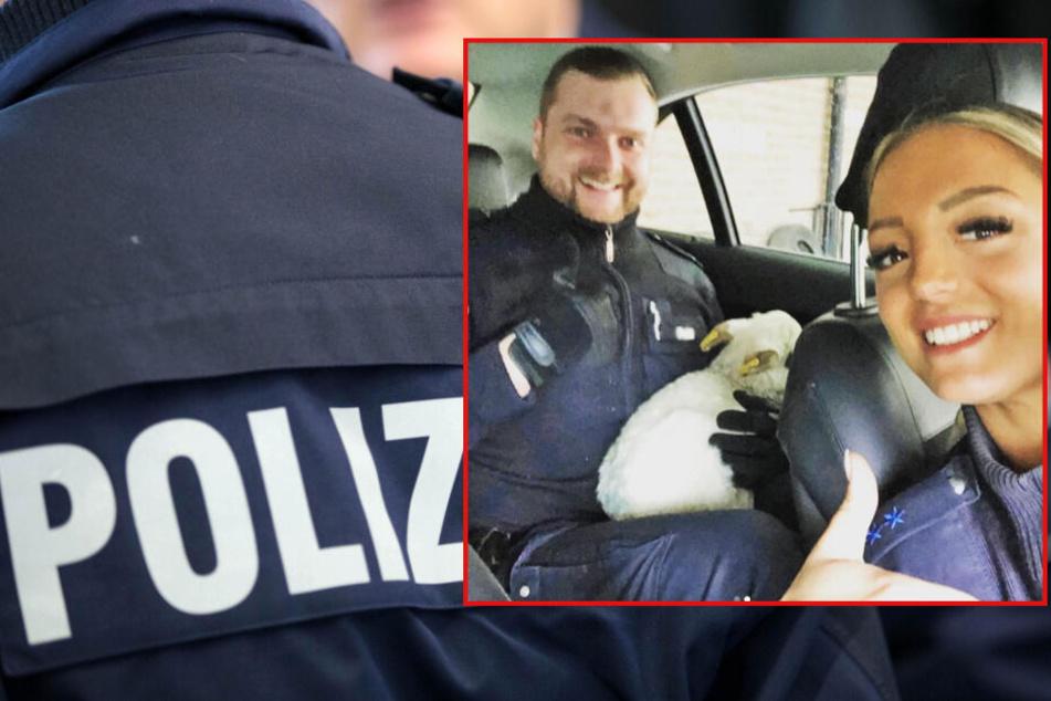 Polizei-Einsatz auf Spielplatz: Beamte retten dieses Tier-Baby in Hamburg!