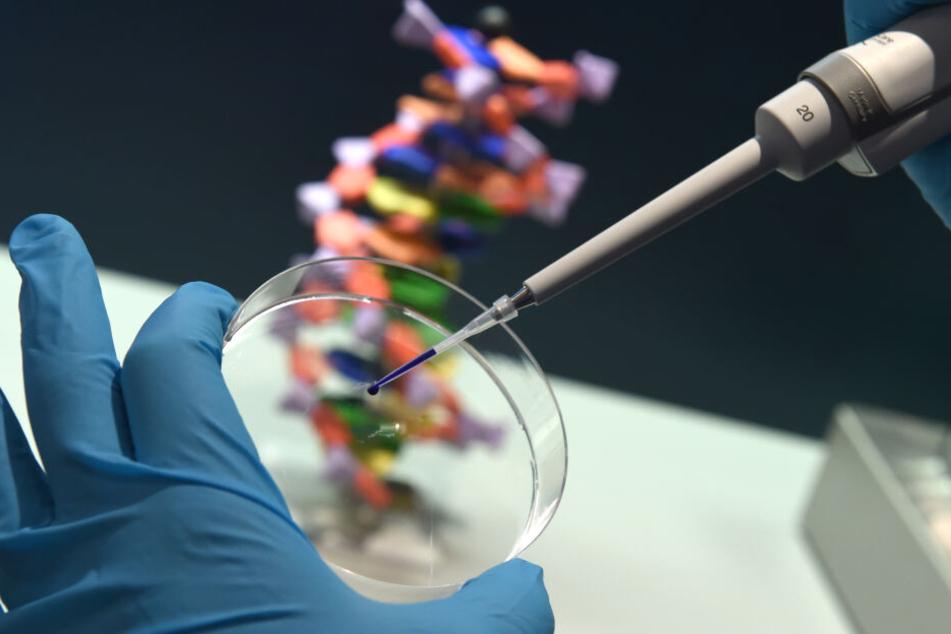 Forscher im Labor schafften es das Knollenwachstum auf molekularer Basis zu modifizieren. (Symbolbild)