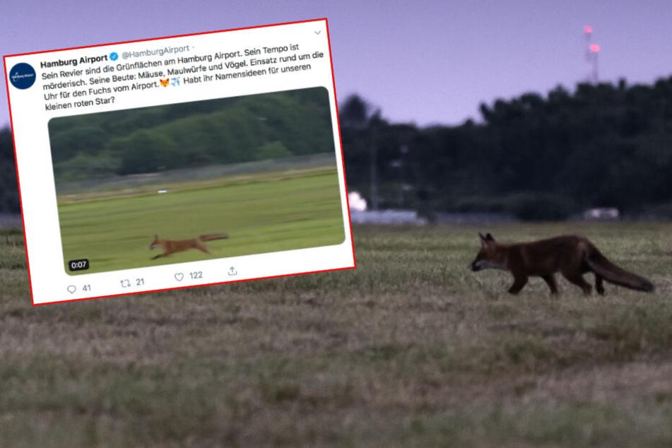 """Flughafen Hamburg freut sich über """"mörderischen"""" Fuchs"""