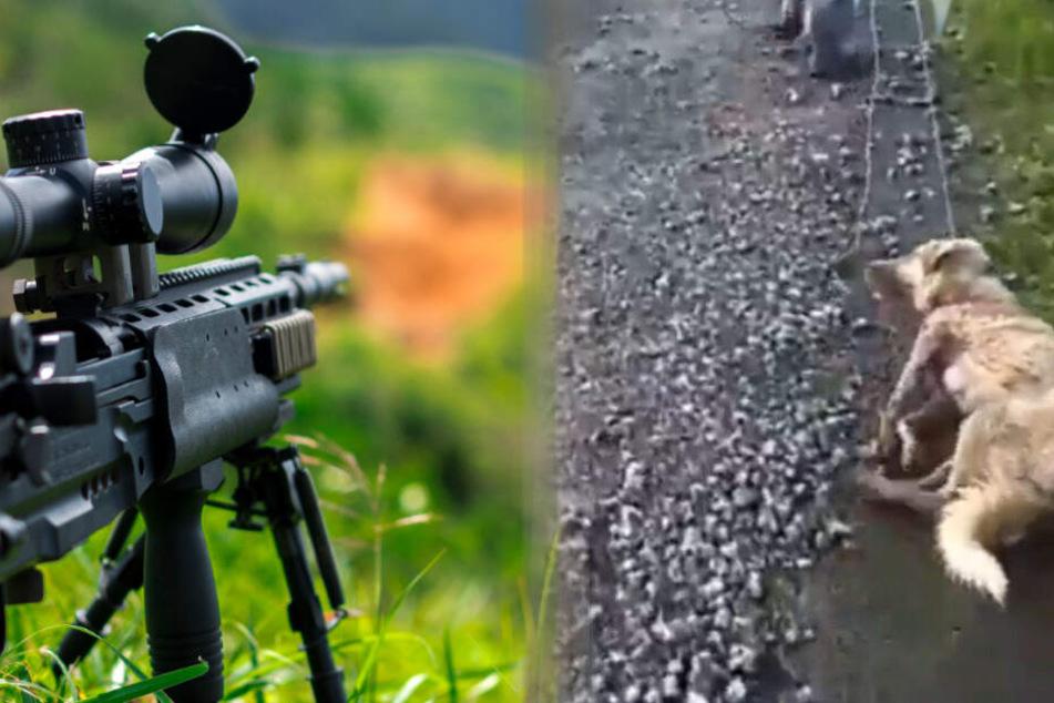 Hunde-Mama wird von Jäger erschossen und durch Gegend geschliffen