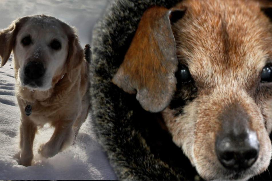 Ab wann ist meinem Hund eigentlich zu kalt?