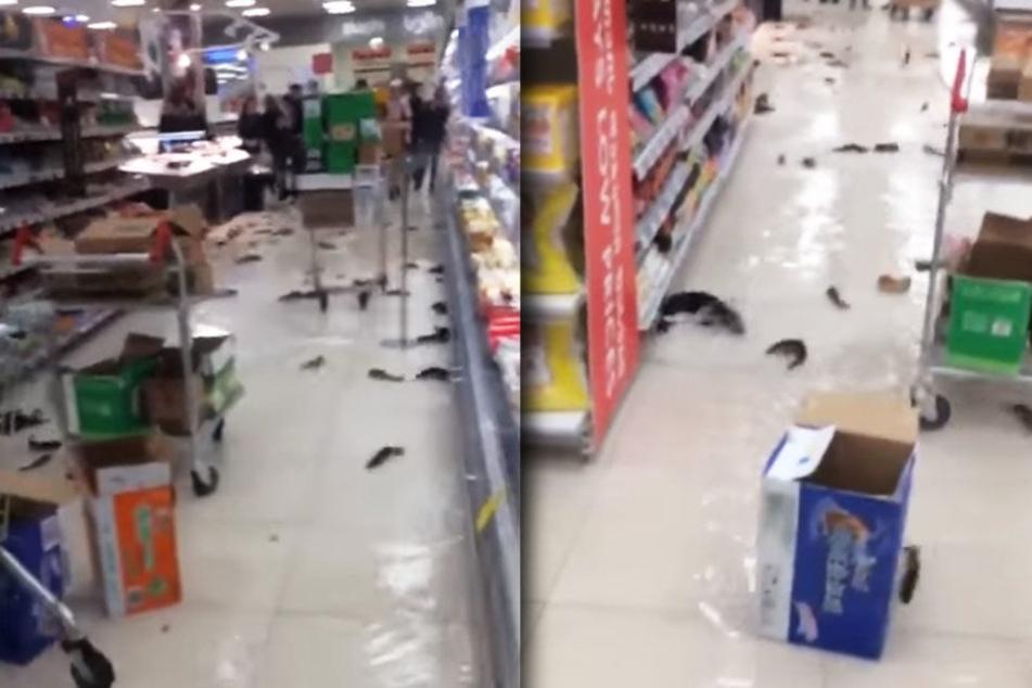 Mehrere Dutzend Fische versuchten auf dem Boden zu überleben.