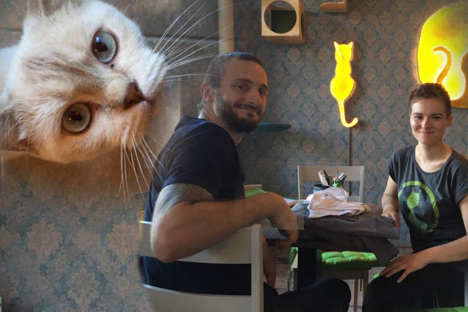 """""""Café Katzentempel"""": Hier könnt Ihr mit Miezen Euren Kaffee genießen"""