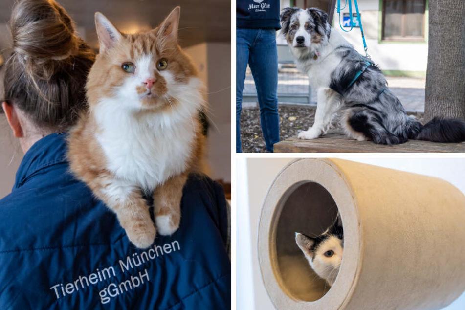 Vermisste Hunde und Katzen: Tierfreunde gehen an ihre Grenzen