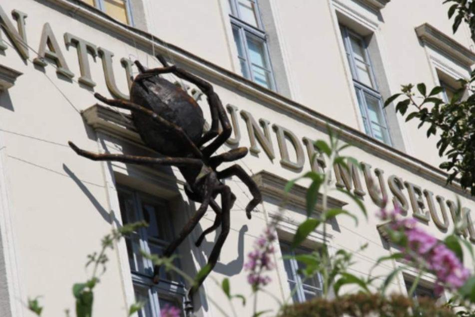 Kosten zu hoch: Naturkundemuseum Leipzig braucht neuen Standort